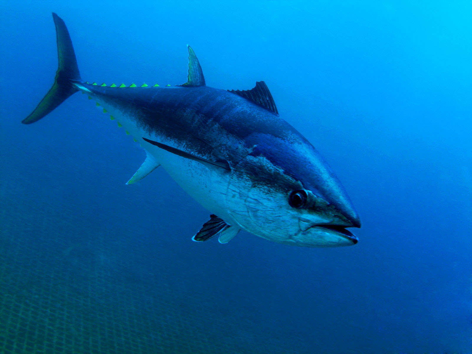 Fishing Charters Cruises North Fork Long Island Longevity