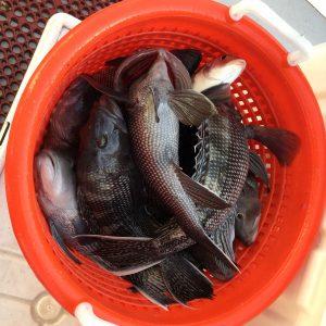 longevity-long-island-fishing-12